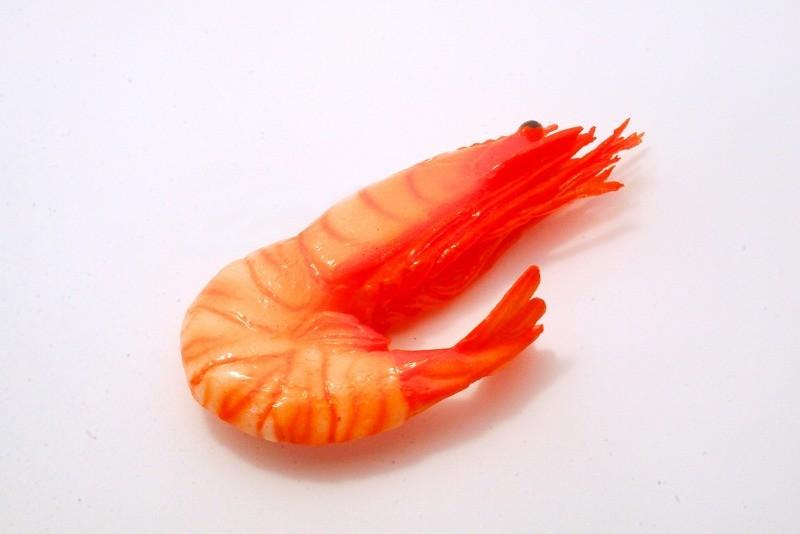 Whole Shrimp Magnet