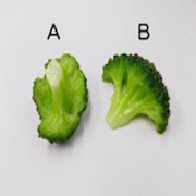 Broccoli (new) Ver. 2 (B) Magnet - Fake Food Japan