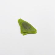 Green Tea (Matcha) (mini) Yatsuhashi Magnet - Fake Food Japan